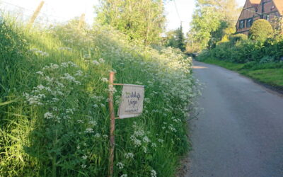 Wingrave with Rowsham Wildlife Walk, July 14th 2021
